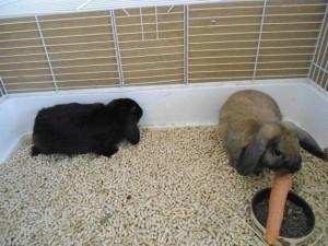 Die Hasen Max und Moritz